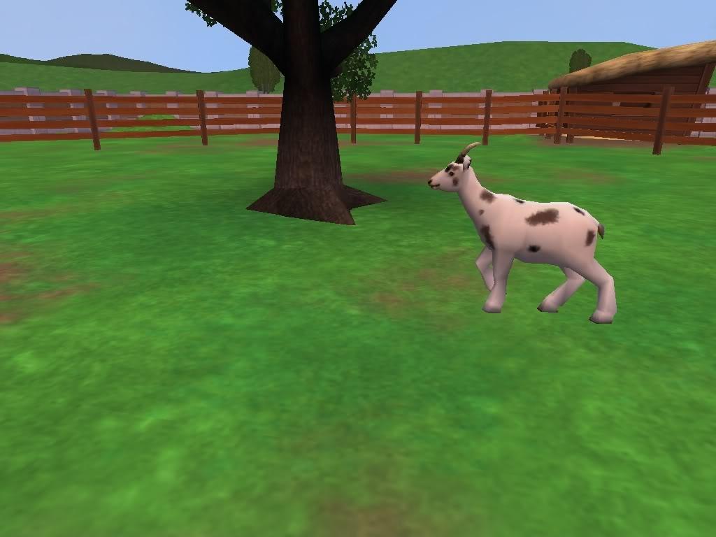 *Rocking Ranch*  ~Image Heavy!!~ GoatspottedRanch