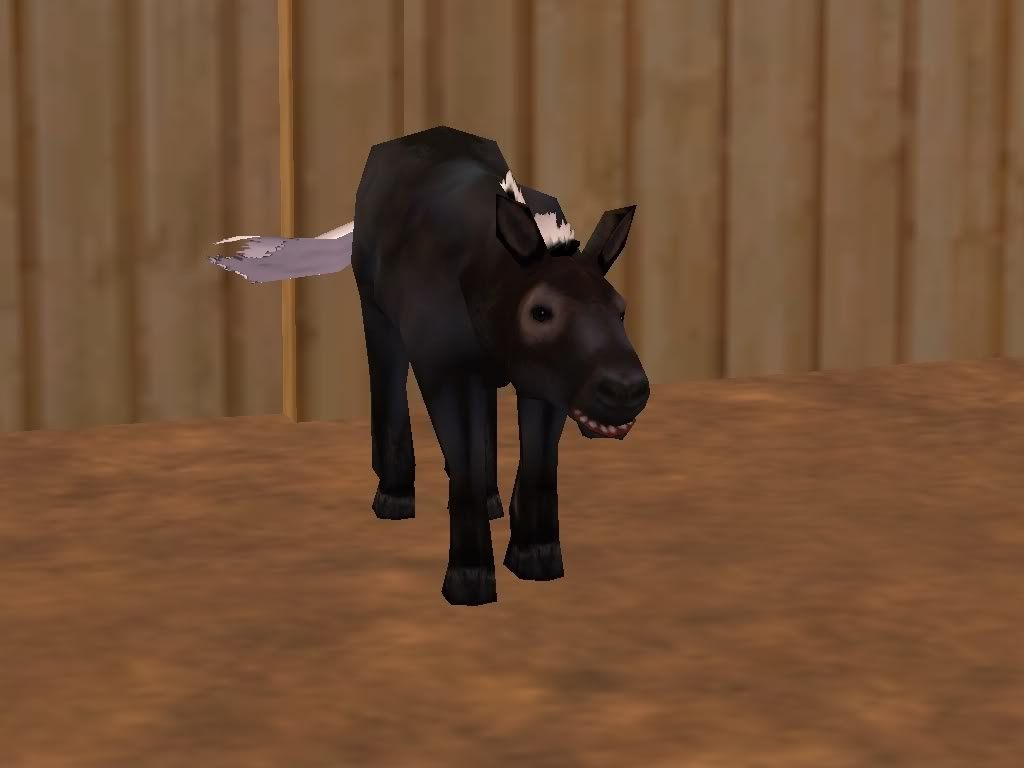 *Rocking Ranch*  ~Image Heavy!!~ MiniblackhorseRanch
