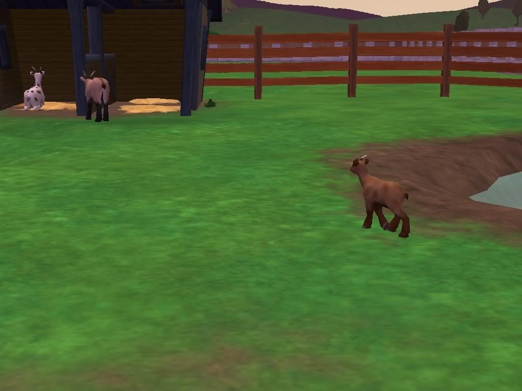 *Rocking Ranch*  ~Image Heavy!!~ BabygoatcutebehindRanch