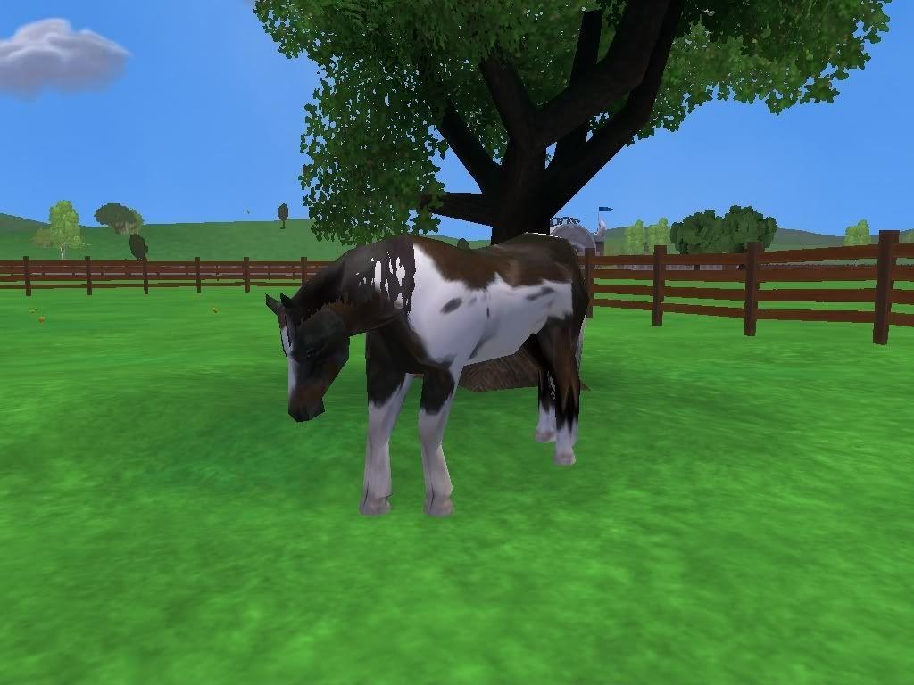 *Rocking Ranch*  ~Image Heavy!!~ SpottedmustangundertreeRanch