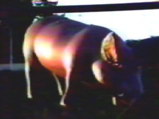 Everything Floyd Pig02-77