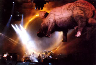 Everything Floyd Pig13-88