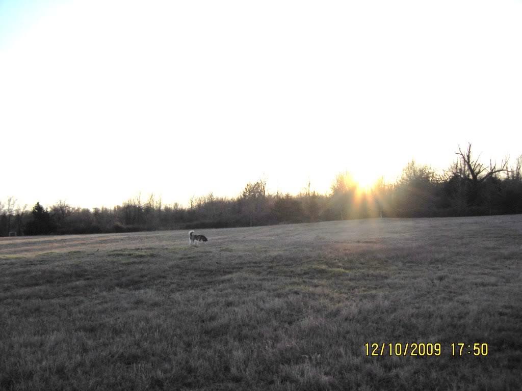 Pics. for huskyluv Field