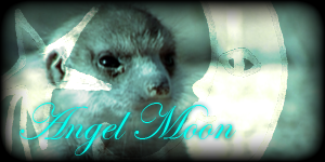 Siggy Project Angel-Moon