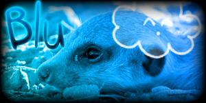 Siggy Project Blu