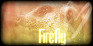 Siggy Project Firefly-1