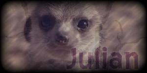Siggy Project Julian-2