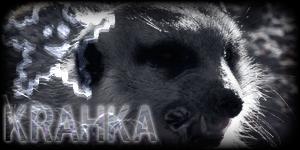 Siggy Project Krahka