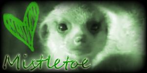 Siggy Project Mistletoe