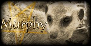 Siggy Project Murphy