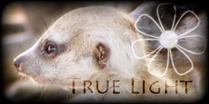 Siggy Project True-Light-1
