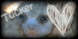 Siggy Project Tucker