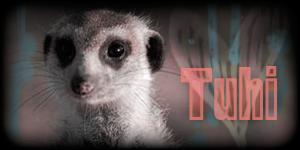 Siggy Project Tuhi-5