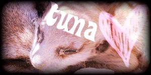Siggy Project Tuna-2