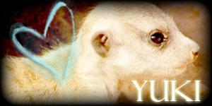 Siggy Project Yuki