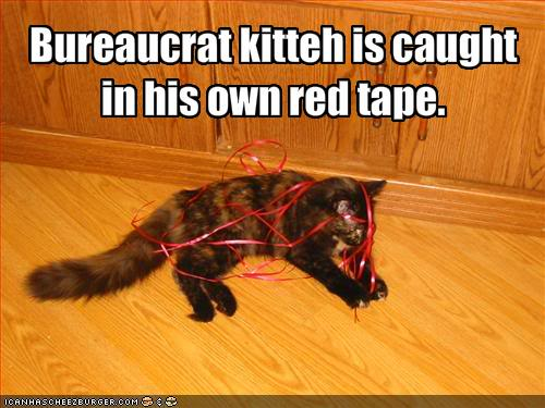 Every day is caturday. Funny-pictures-bureaucrat-cat-is-ca