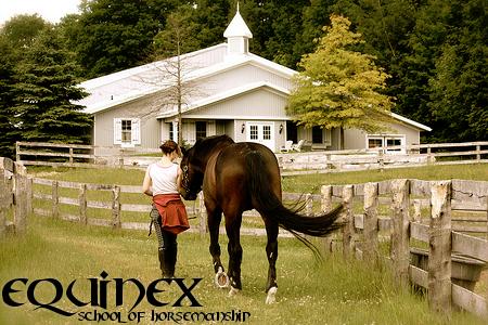 Equinex: School of Horsemanship Equinexadvertisementbanner