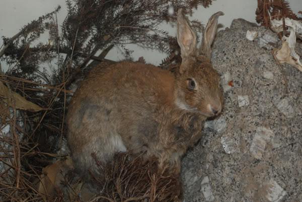 1 marzo 2012: la gita a Montecristo Coniglio1