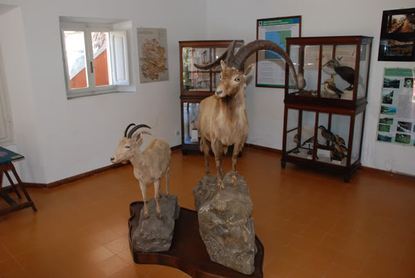 1 marzo 2012: la gita a Montecristo Museo