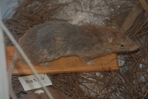 1 marzo 2012: la gita a Montecristo Rattomuseo1