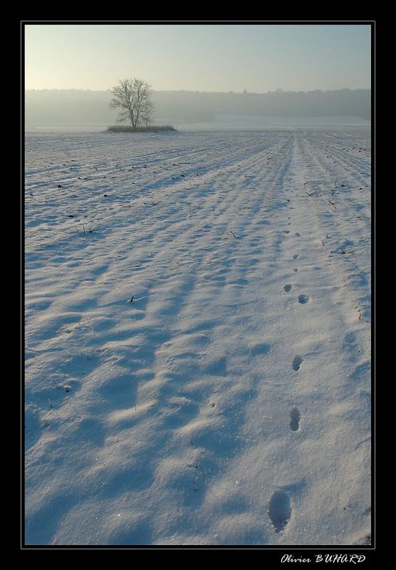 Une journée glaciale! D70_007050_forum
