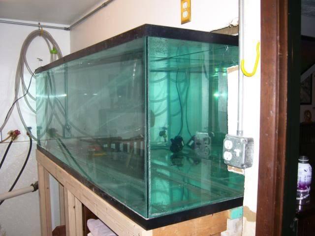 135 gal. in wall Tanginyikan tank. 100_0228