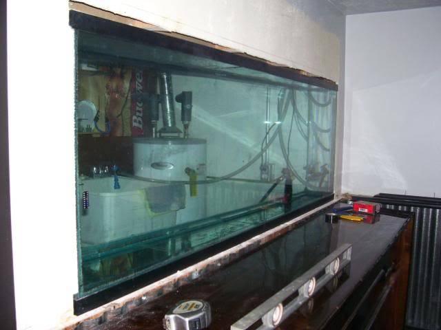 135 gal. in wall Tanginyikan tank. 100_0230