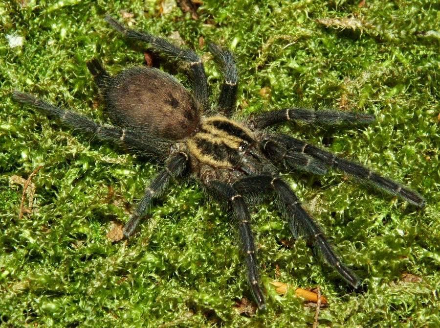 A few spider pics DSCF0021-13