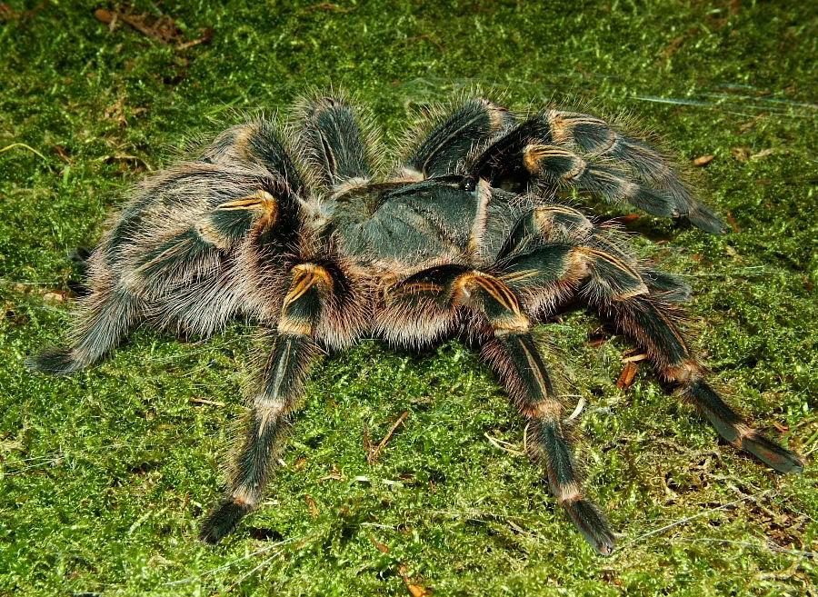 A few spider pics DSCF0028-8