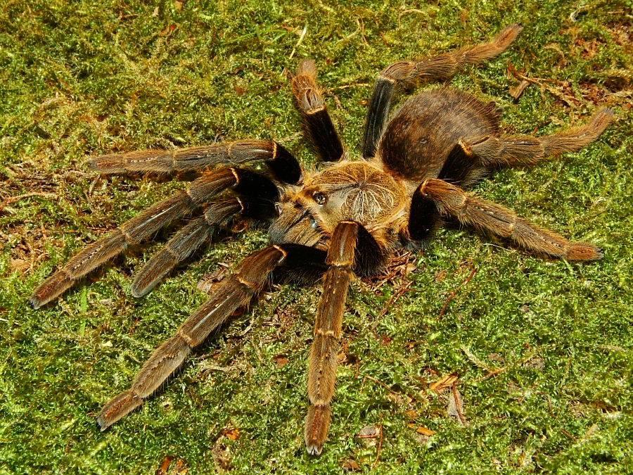 A few spider pics DSCF0034-4