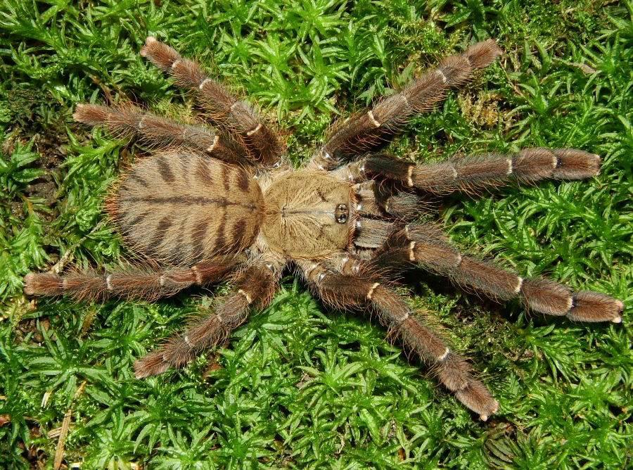 A few spider pics DSCF0034-5