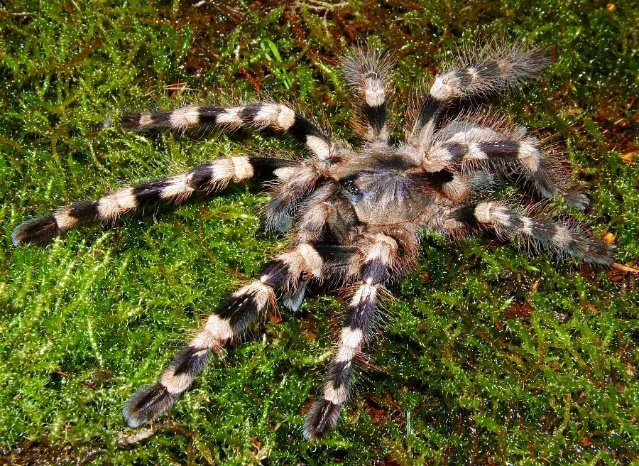 A few spider pics DSCF0046-4