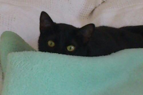 Αναζητειται υιοθεσια  (γατας) ,σε σπιτι με περιφραγμενο κηπο. DSC_0458-1-1_zpsapvtwkk2
