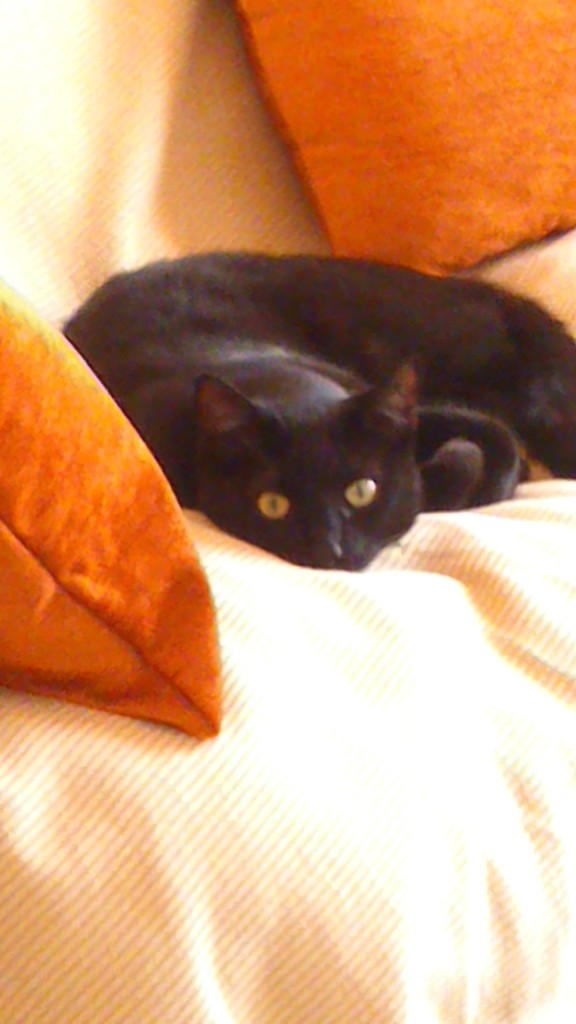 Αναζητειται υιοθεσια  (γατας) ,σε σπιτι με περιφραγμενο κηπο. DSC_2466_zpshibemys4