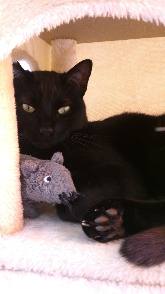 Αναζητειται υιοθεσια  (γατας) ,σε σπιτι με περιφραγμενο κηπο. DSC_2507_zpsaffflr4v