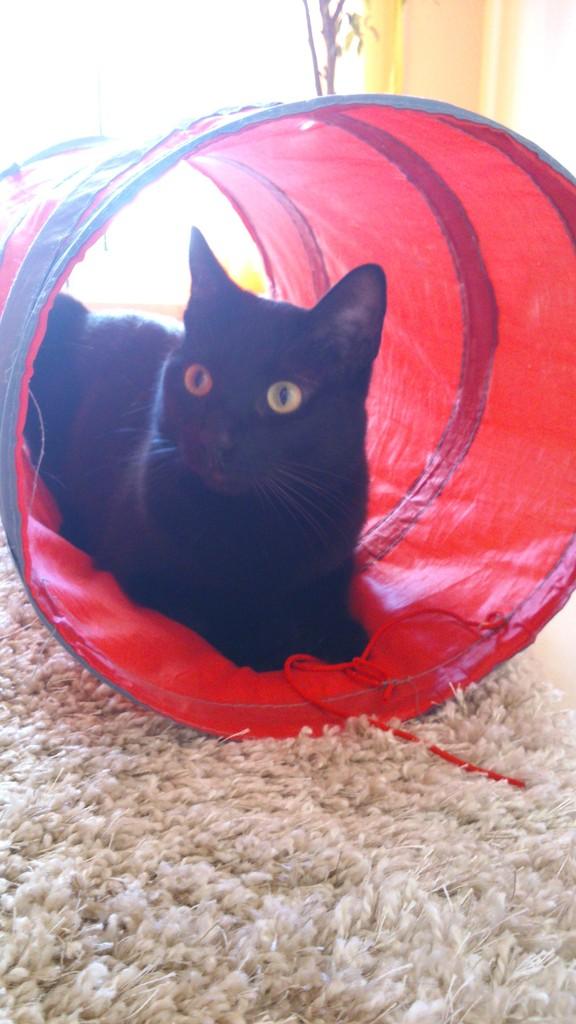 Αναζητειται υιοθεσια  (γατας) ,σε σπιτι με περιφραγμενο κηπο. DSC_2545_zpsjmfr1leo