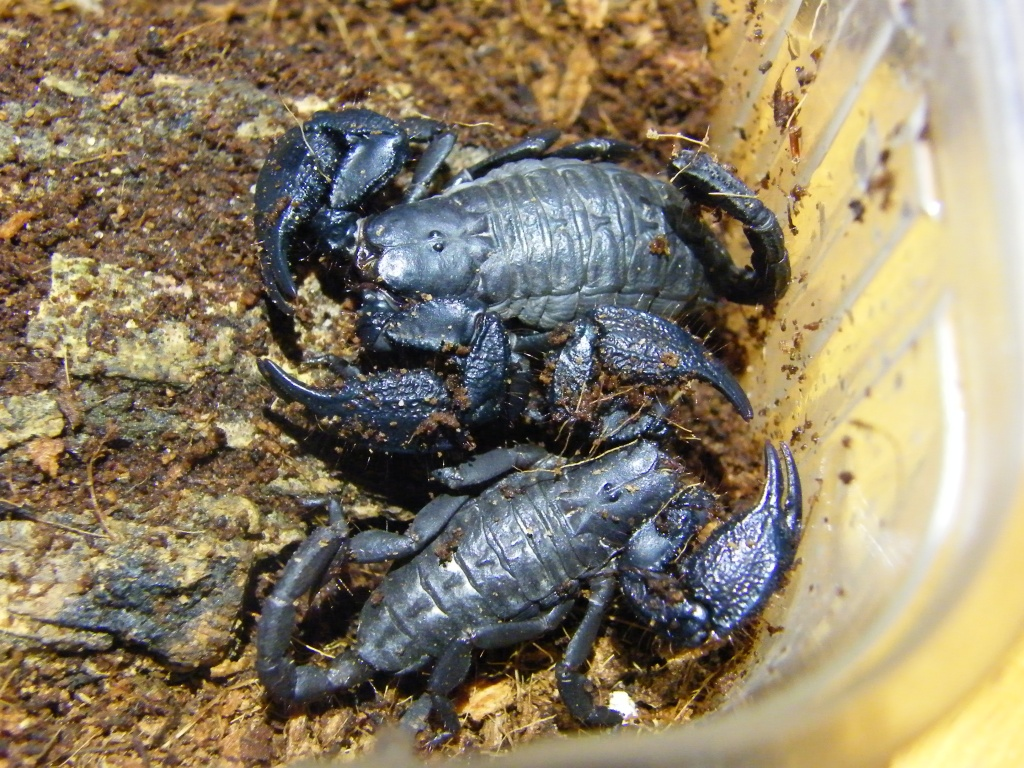 [Sharing] Your top 5 scorpions ?? DSCF4674_zps65354730