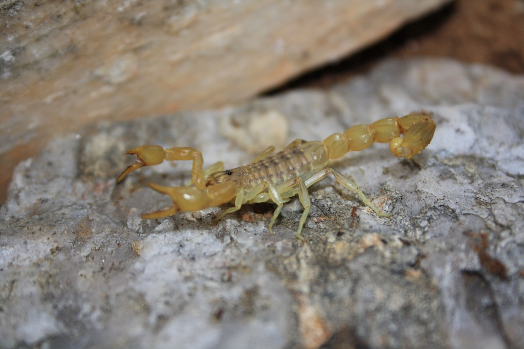 [Sharing] Your top 5 scorpions ?? IMG_5810_zps29c5210d