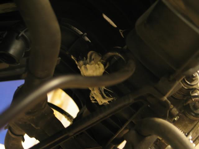 Blöjan - 528 turbo!  - Sida 2 IMG_4221