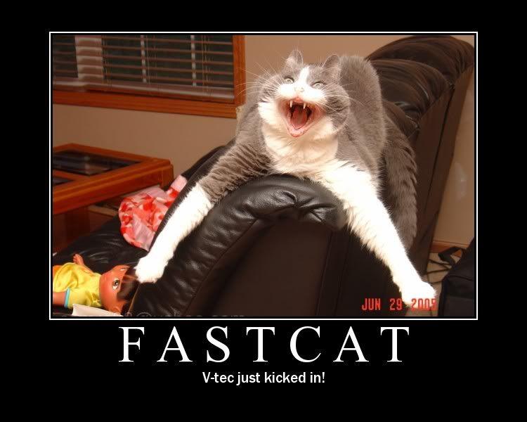 Thread full of funnies. Fastcat