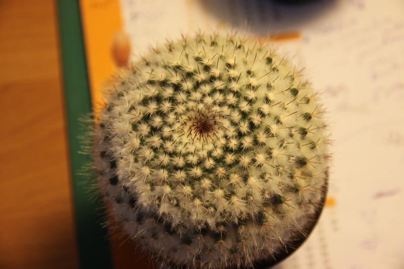 Mammillaria from ELK Cactus3