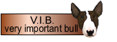 V.I.B. very important bull