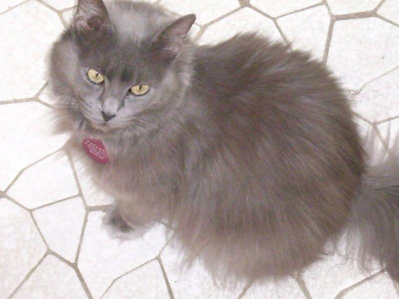 Tatiana (Tanya) (Tat the Cat)!! Cats200b