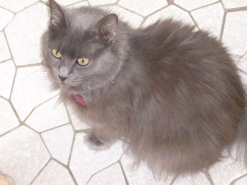 Tatiana (Tanya) (Tat the Cat)!! Cats200c