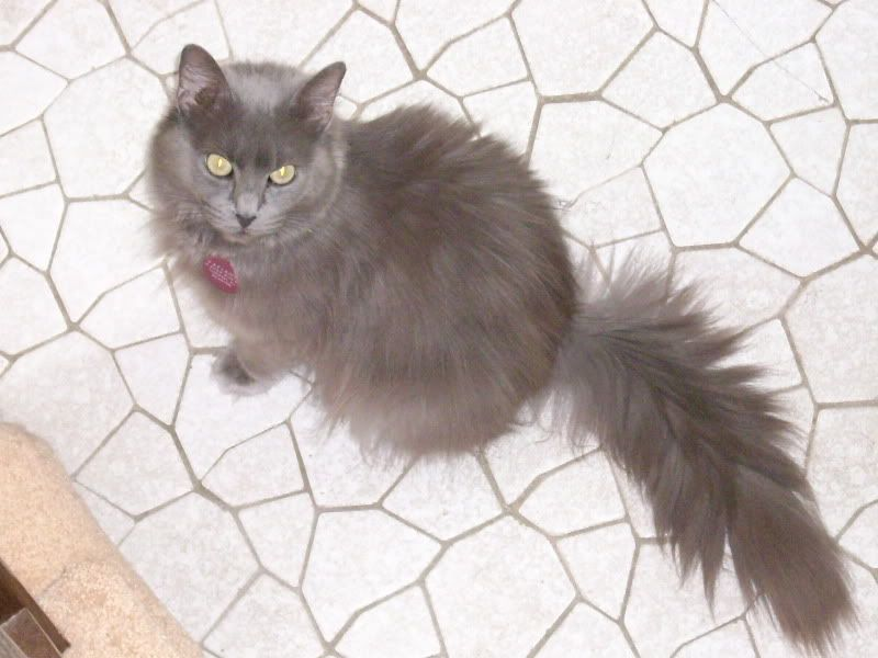 Tatiana (Tanya) (Tat the Cat)!! Cats200d