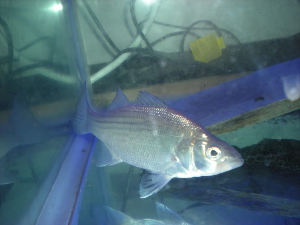 Pictures of some of my fish TFH006