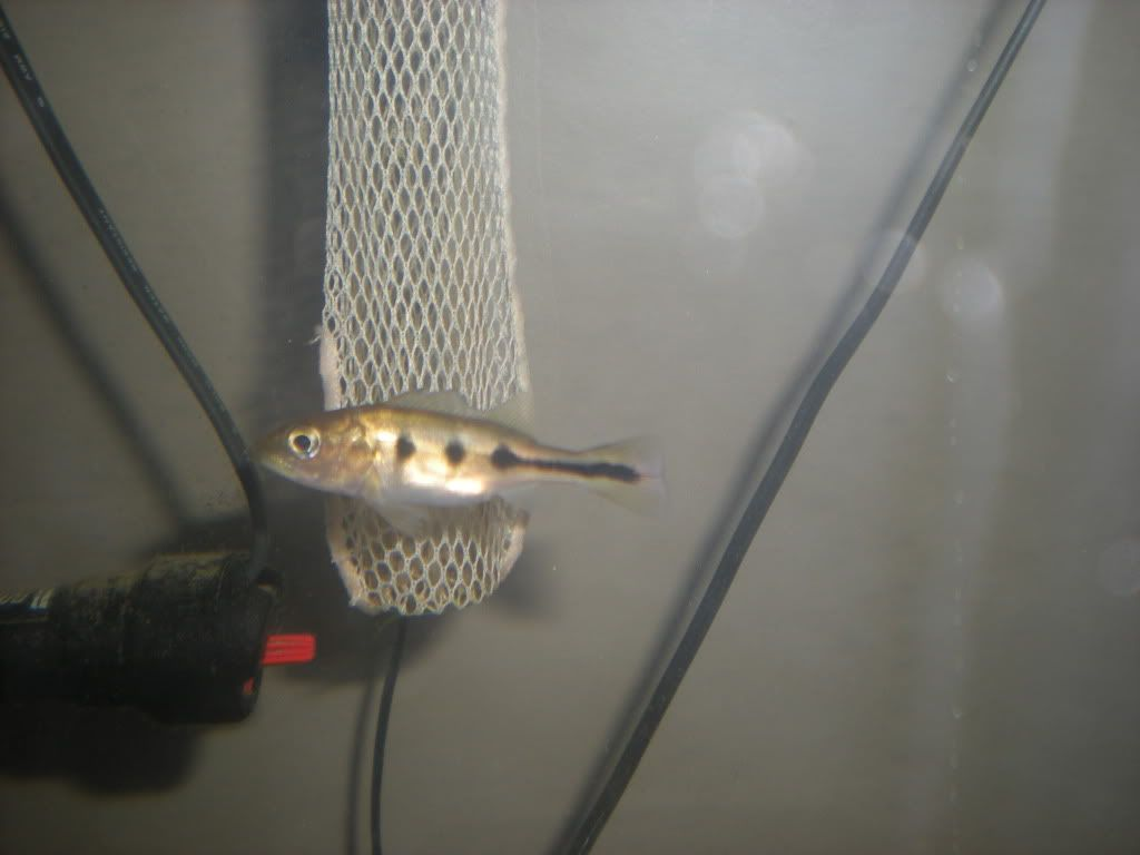 Pictures of some of my fish TFH016