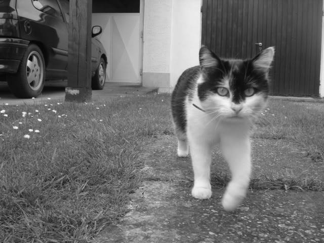 Moja mica-maca Mrvica DSC01818