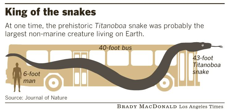 Giant Snake!!! Titanoboa