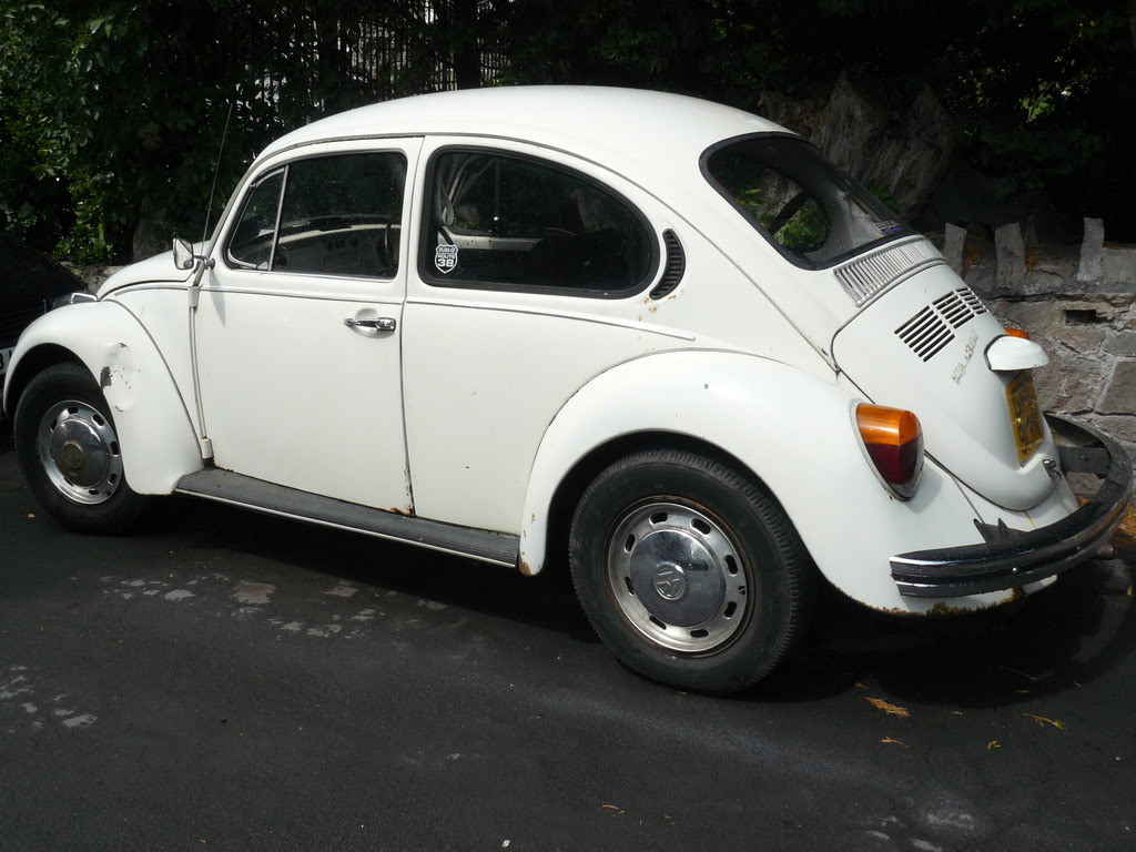 My first beetle Stella... P1020338